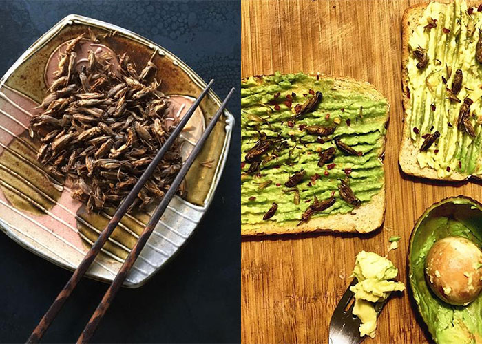 The Lastest Wave of Healthy Eating. Crickets!
